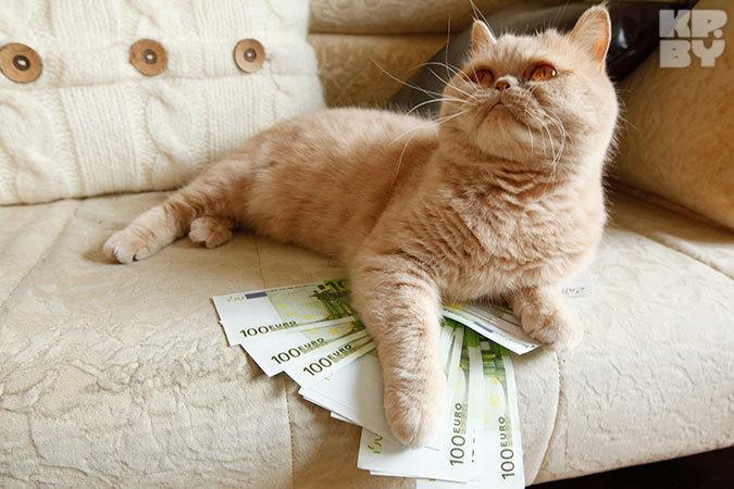 Доллар подорожал на 230 белорусских рублей а евро- на 60. Фото Дмитрий ЛАСЬКО Доллар подрос на 230 рублей евро- на 60