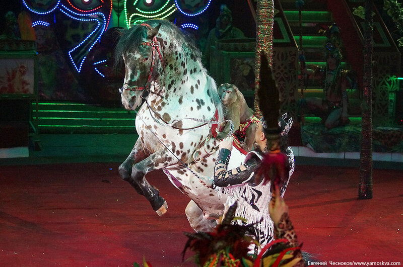 Зима. Королевский цирк. 20.02.15.33.Африка..jpg