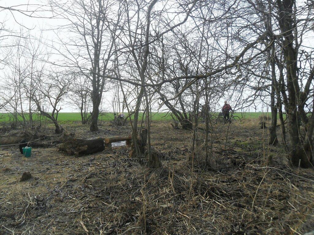 Деревья, в марте ... SAM_5922.JPG