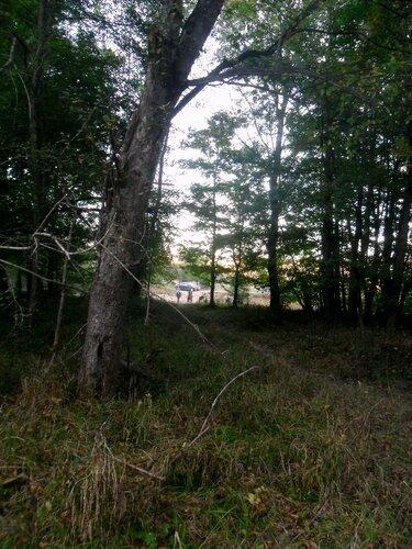 Лес, на тропе ... SAM_4221.JPG