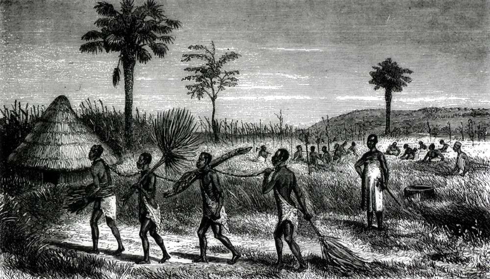 Рабы, занятые уборкой риса (Восточная Африка, 1860-е годы)