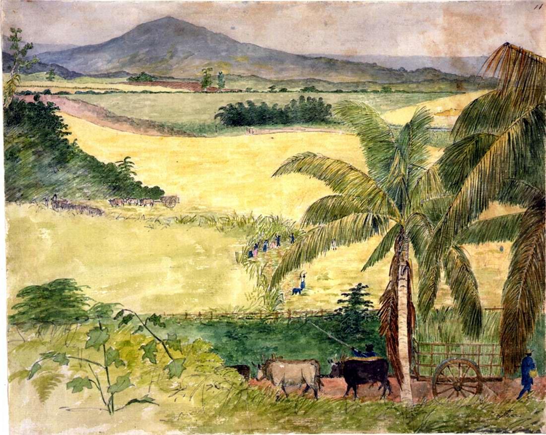 Рабы занимаются уборкой сахарного тростника (Ямайка, 1815 год)