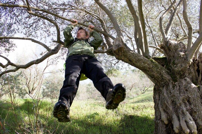 ветви оливы очень крепкие