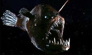 Ученые сняли на видео «Морского черта»