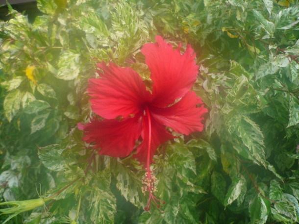 Цветы Таиланда 0 141ae8 60abe430 orig