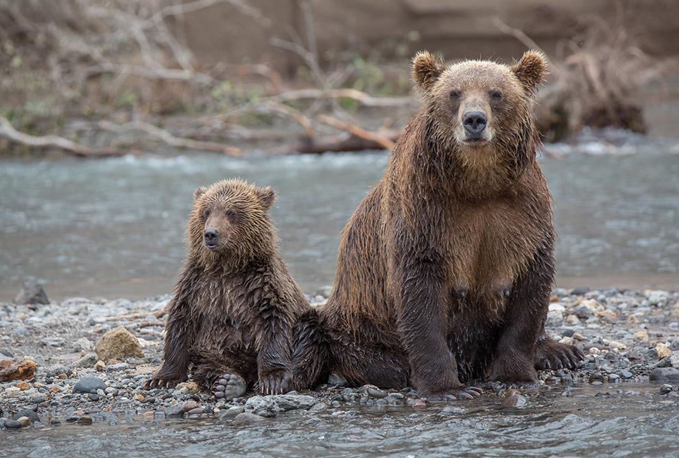 Насытившись вдоволь медвежьей рыбалкой, да и вообще наблюдением за жизнью медведей, наша команда отп