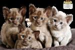 12926131345_animaux_nikita.png