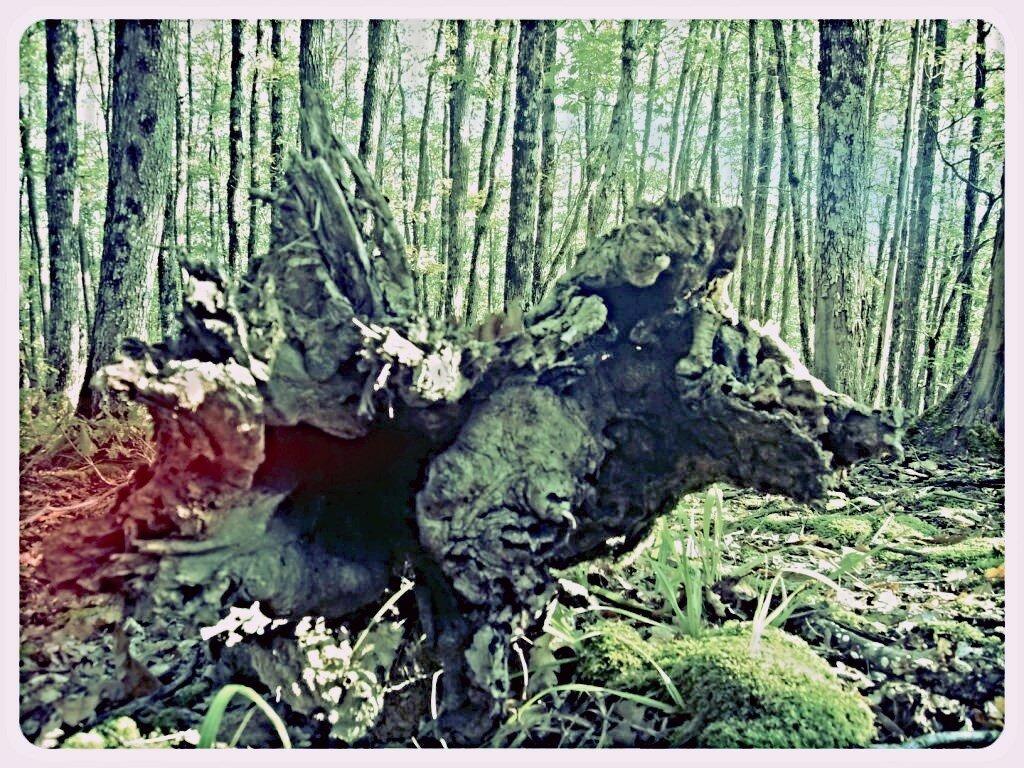 12 октября 2008, под Горячим Ключом, в лесу (98).JPG