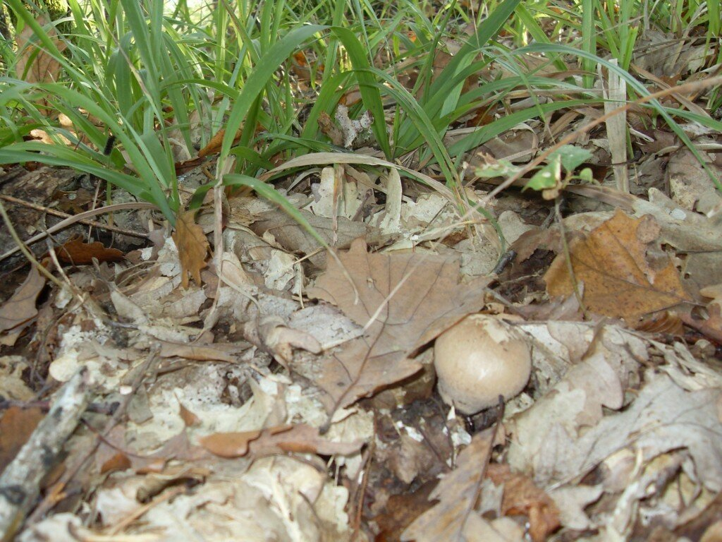12 октября 2008, под Горячим Ключом, в лесу (101).JPG