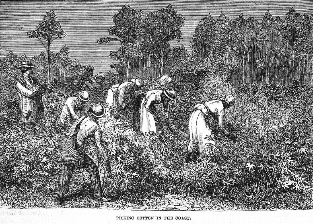 Рабы на занимаются уборкой хлопка (штат Южная Каролина, 1880 год)