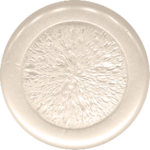 button_8_maryfran.png