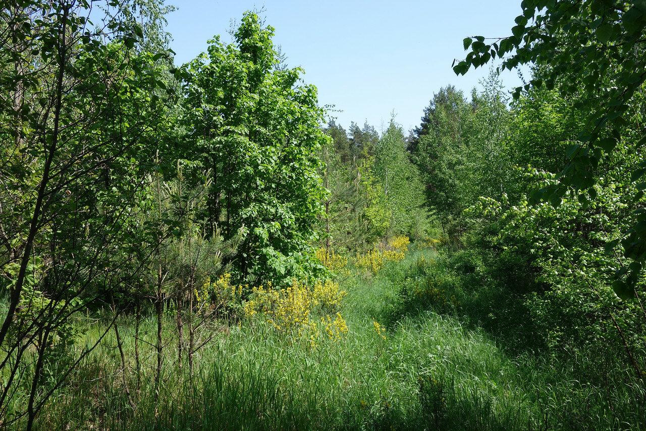 в лесу перед Задонском у привал-ночевки №7