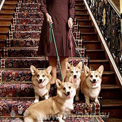 Елизавета II отказалась держать в своем дворце собак