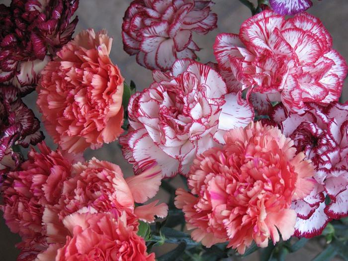 Maroosya flowers