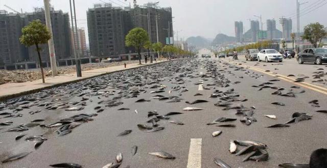 Рыбный дождик