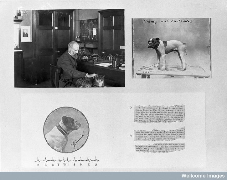 L0011812 Augustus Desire Waller in his laboratory