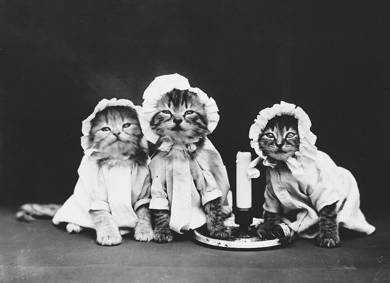 Коты и собаки. Гарри Уиттер Фрис.