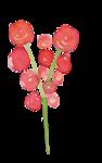 SWIEJKO_flowers_3j.png
