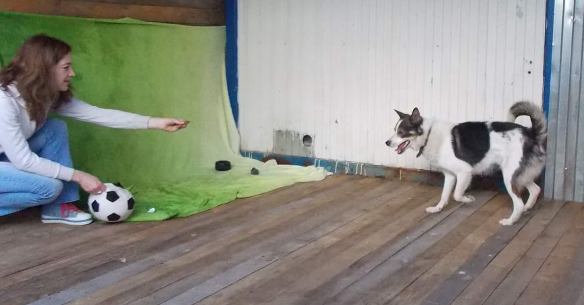оскар собака из приюта догпорт