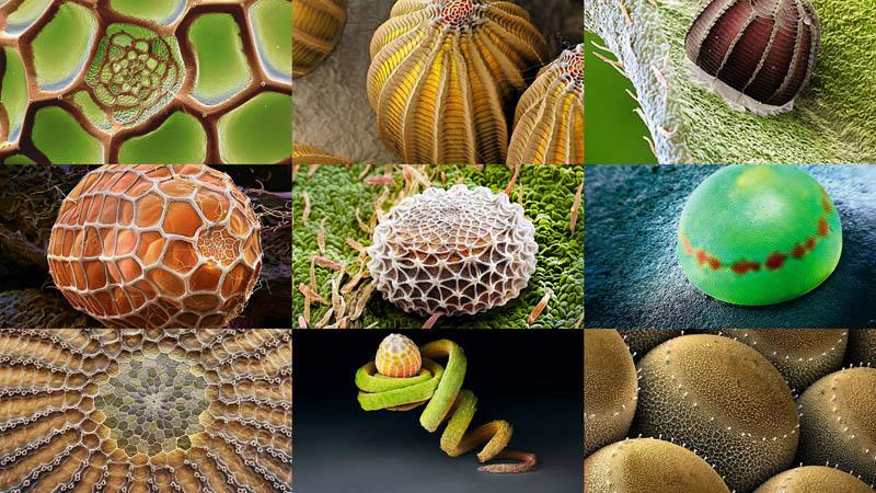 Макрофо: Яйца насекомых (10 фото)