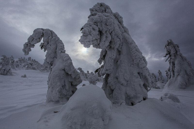 Снежные «монстры» на вершине Пильско