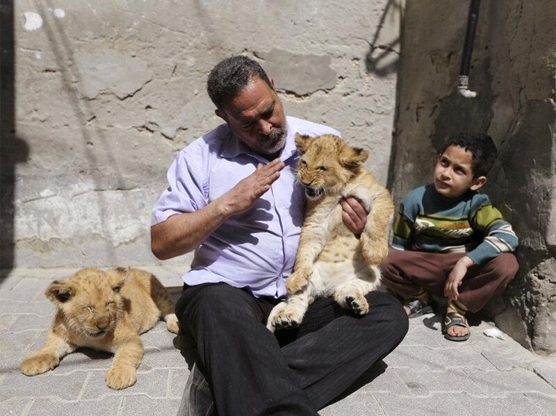 Необычные (удивительные!) факты о животных