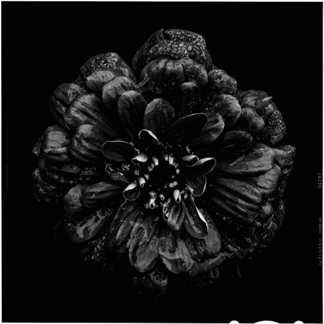 tuSend no flowers, Bettina Güber280.jpg