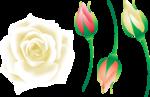 розовые цветы 1 (7).png