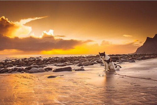 Путешествие с собакой по Норвегии