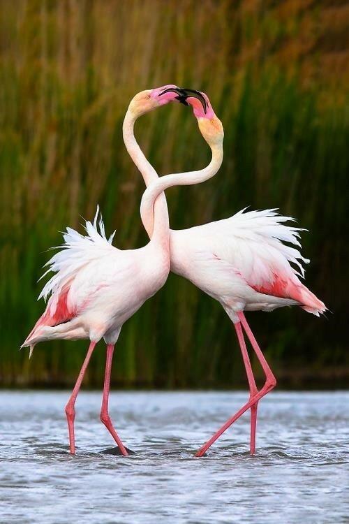 Бог создал животных, чтобы отогревать наши холодные сердца.  Марина Москвина