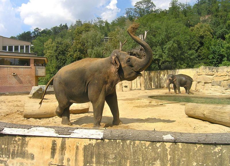 zoopark-v-prage-slonu-foto_resize.jpg