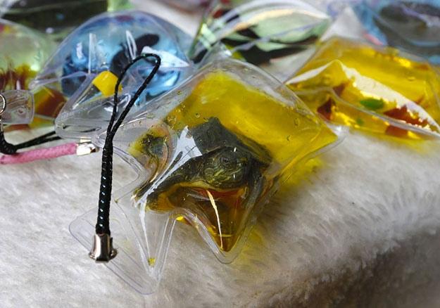 Китайцы продают брелоки с живыми рыбками