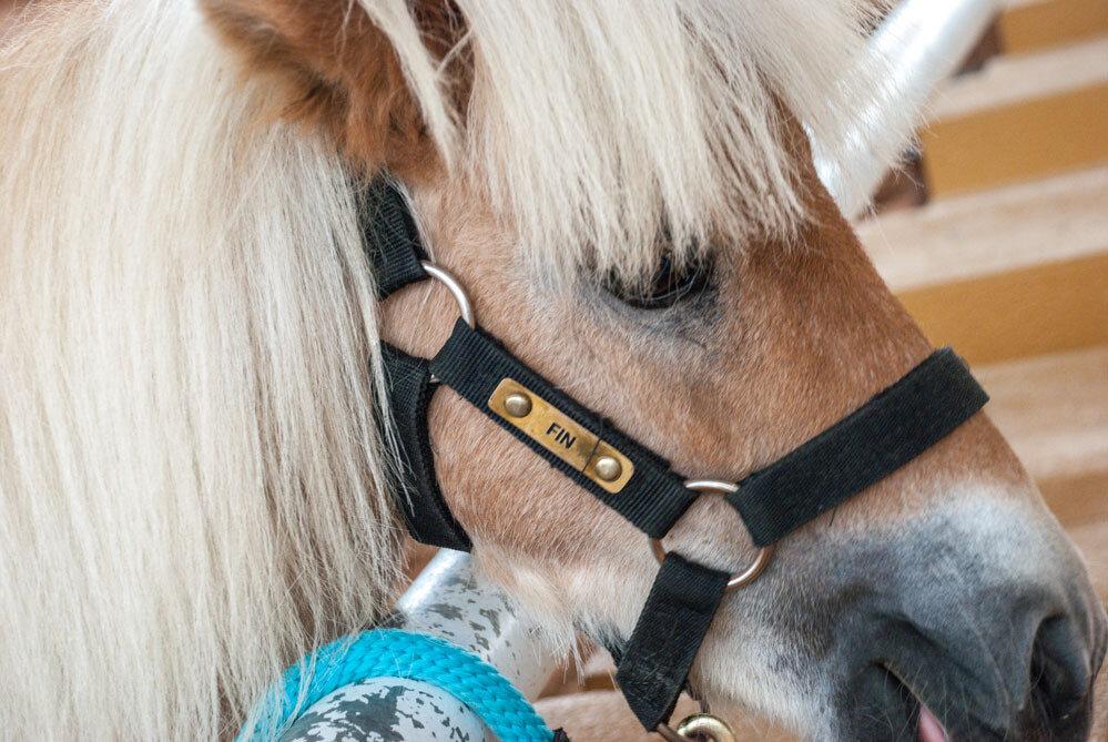 Pipo Pony Club