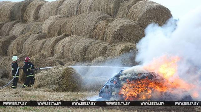 В Оршанском районе сгорело 63 т соломы и 2,5 га пшеничного поля
