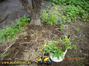 Как избавиться от сорняков