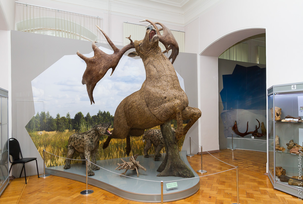 Астраханский краеведческий музей 9