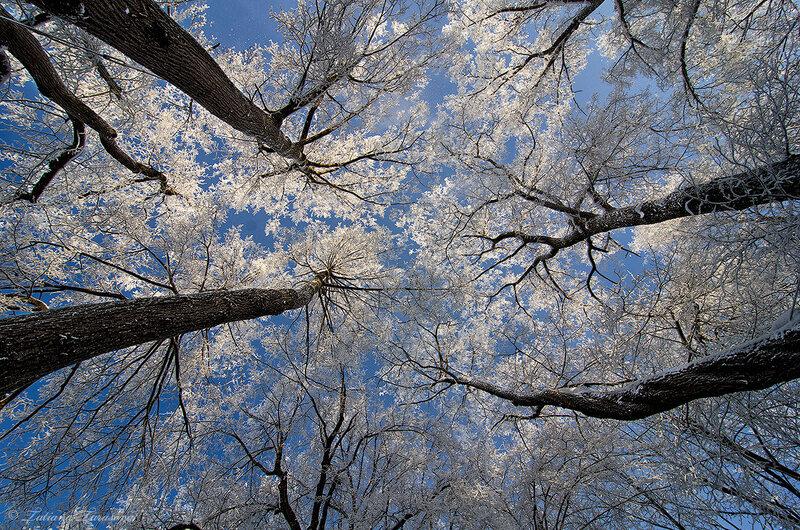 Когда деревья были большими....