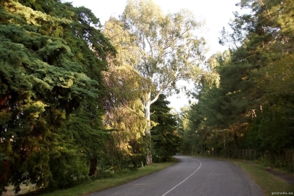 Дорога вдоль побережья пицундского полуострова.