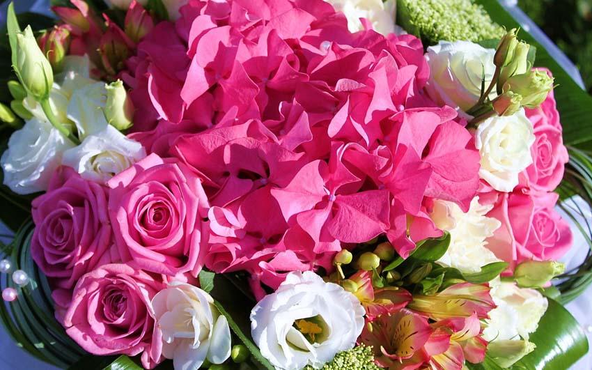Цветы Букеты Фото Обои наемный рабочий стол