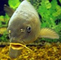Книга Звуковая приманка для рыб (Схема+Инструкции)  5,56Мб