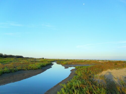 Утром, на Азовском побережье ... SAM_2266.JPG