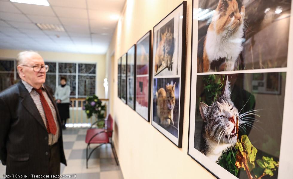 выставка, посвященная кошкам, Тверь, кошки