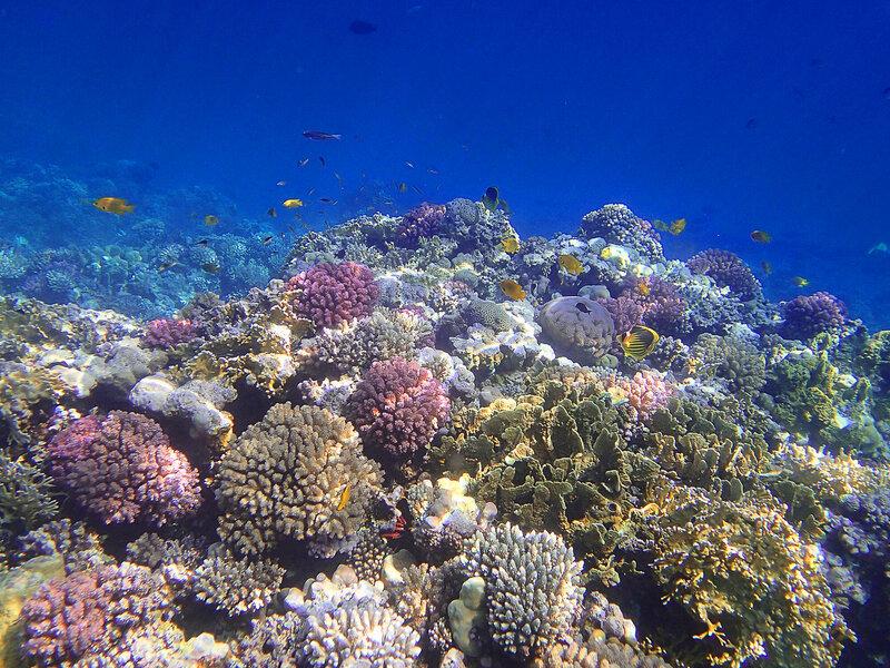 Живой риф.
