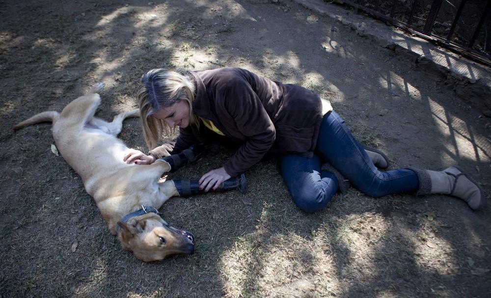 Приют для собак инвалидов в Мехико