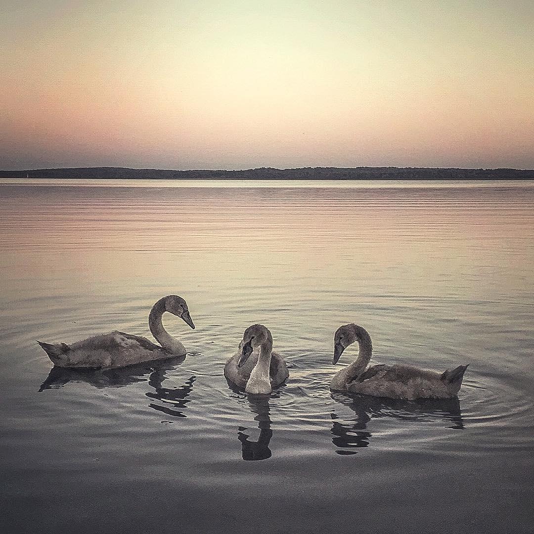 Фотограф из Пскова получил премию за лучшие фото в Instagram 0 144633 fd751979 orig
