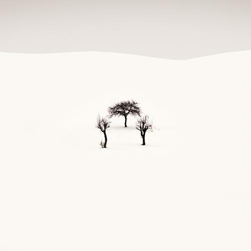 Фотограф Ebru Sidar. Белое безмолвие в фотосете `White stb50ory`.