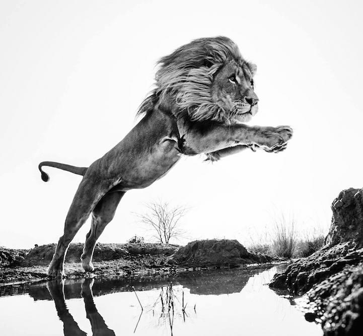 Мир дикой природы в самом неожиданном образе от Дэвида Ярроу (David Yarrow) (9 фото)