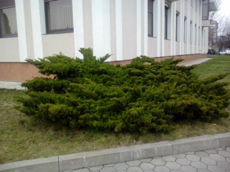 Кёнигсберг в Калининграде - Страница 4 0_da376_f8011bc7_orig