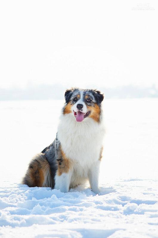Мои собаки: Зена и Шива и их друзья весты - Страница 8 0_a8438_78643104_XL