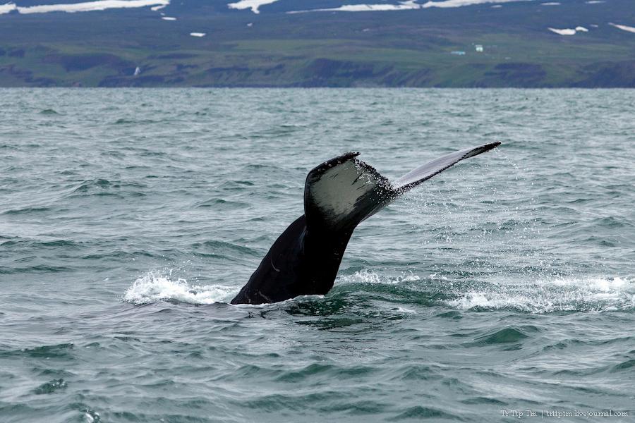 7. Дороги Нордюрланда и киты залива Скъяльфанди.
